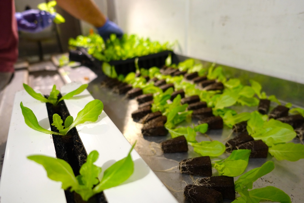 via http://www.freightfarms.com/blog/an-intro-to-hydroponics-9-benefits-of-growing-without-soil?utm_content=32601529